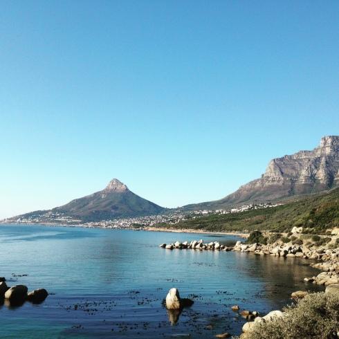 Cape Town Lion