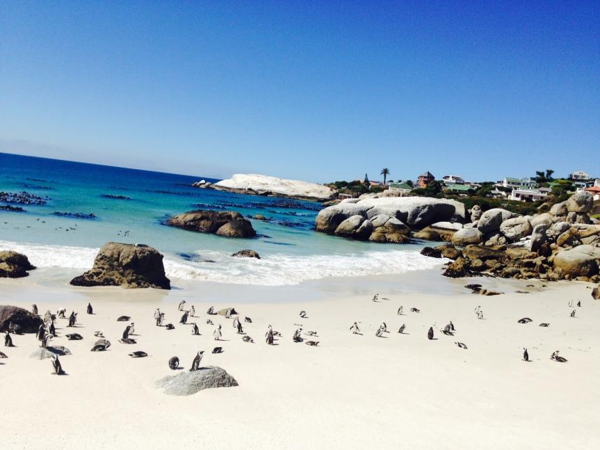 Pingouins Boulders