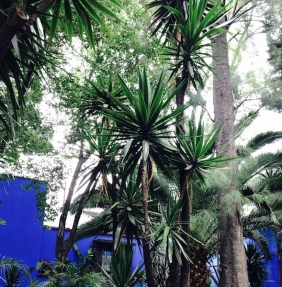 mexico-casa azul-jardin