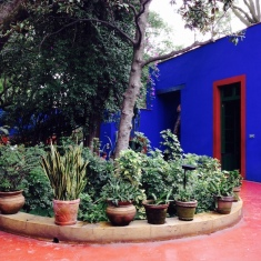 mexico-casa azul-plantes
