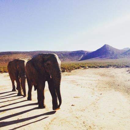voyage-safari