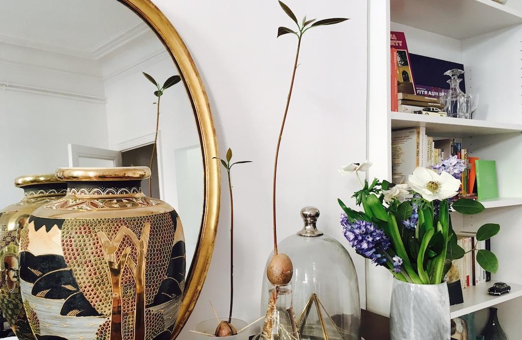 green my home comment faire pousser un avocatier good. Black Bedroom Furniture Sets. Home Design Ideas